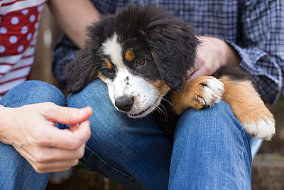 Couple sitting outdoors, holding pet dog on lap, mid section - p924m1404179 by Paige Green Photography
