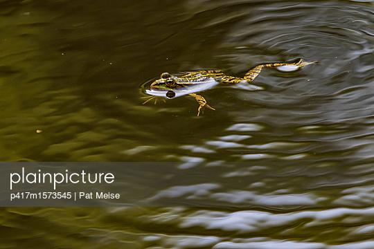 Frosch - p417m1573545 von Pat Meise