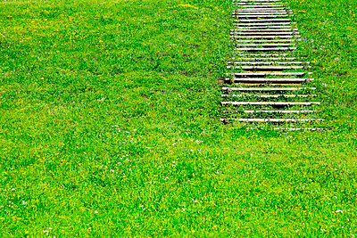 Boardwalk and grassland - p307m803419f by SHOSEI/Aflo