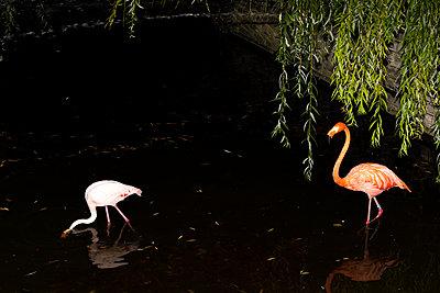 Two flamingos - p712m2082628 by Jana Kay