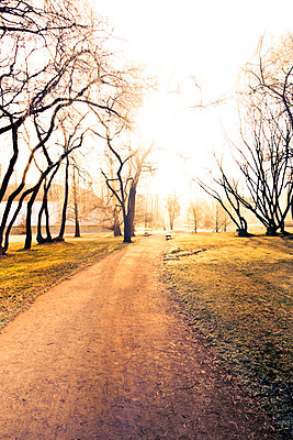 Empty path in a park at morning - p965m1465165 by VCreative