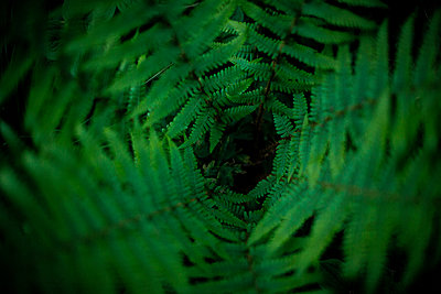 Fern leaves - p312m1139723 by Peter Rutherhagen