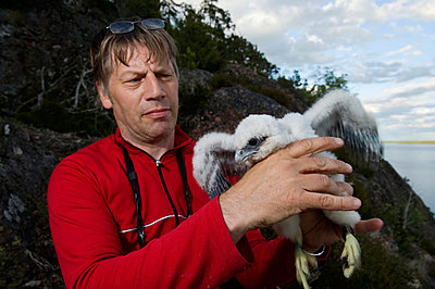 Man holding peregrine falcon - p5756277f by Schlyter, Fredrik