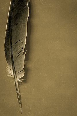 Feather - p1228m1162624 by Benjamin Harte