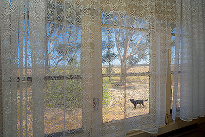 Net Curtain in Window, Dog and Tree - p1562m2278109 by chinch gryniewicz