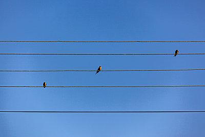 Birdie - p280m2253469 by victor s. brigola