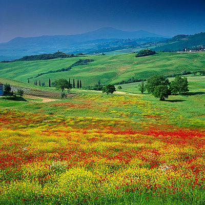Rolling hills in rural landscape - p64116019f by David Henderson