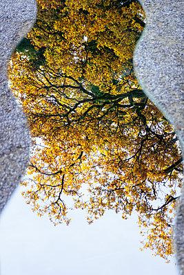 Spiegelung der Natur - p728m1193635 von Peter Nitsch