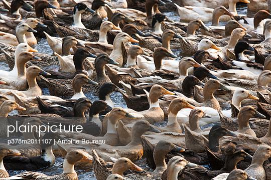 p378m2011107 von Antoine Boureau