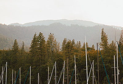Sailboat masts among trees, Redding, California, USA - p301m2213615 by Toby Mitchell