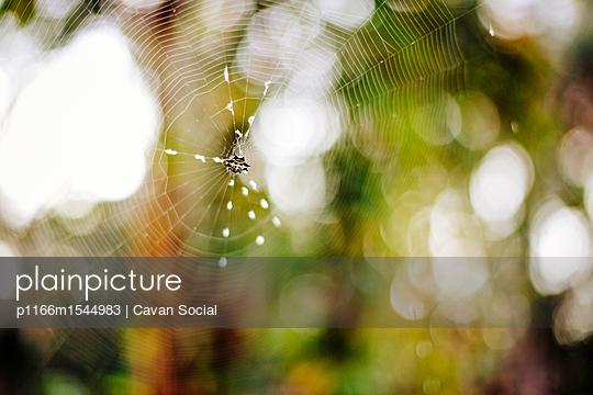 p1166m1544983 von Cavan Social