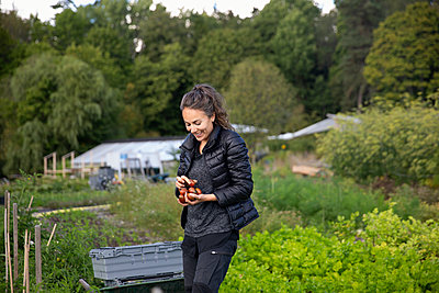 Woman on vegetable patch picking fruits - p312m2217206 by Christian Ferm