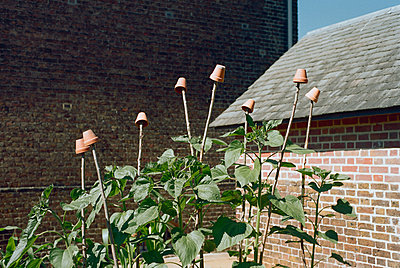 Pflanzen in einem Nutzgarten in einem Hinterhof, London - p1481m2203843 von Peo Olsson
