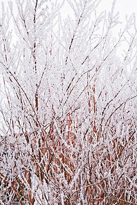 Winter - p2686959 von Christof Mattes