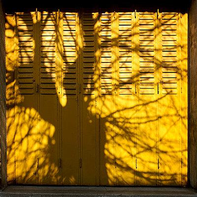 Shadow of a tree - p8130302 by B.Jaubert