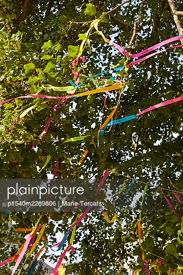 Colourful ribbons in a tree - p1540m2289806 by Marie Tercafs
