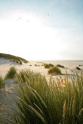 Holländische Küste - p5670685 von ofoulon