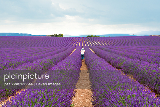Mother and daughter walking among lavender fields in the summer - p1166m2136644 by Cavan Images