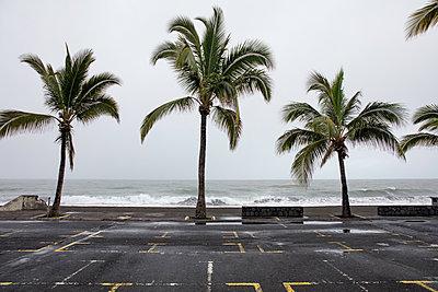 La Reunion - p1272m1558551 von Steffen Scheyhing