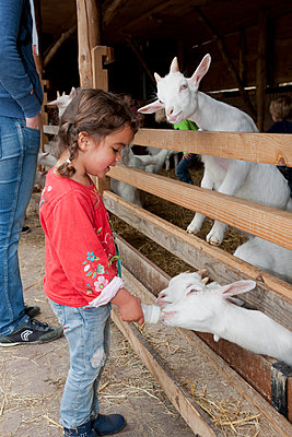 Girl feeding goats - p1231m1091762 by Iris Loonen