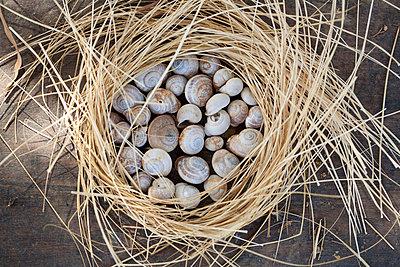 Schnecken gesammelt - p9480094 von Sibylle Pietrek
