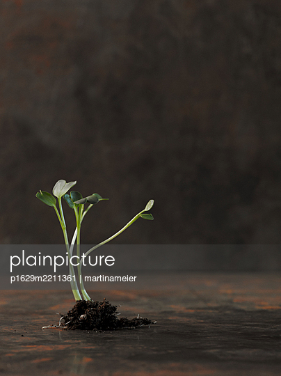 Small plant - p1629m2211361 by martinameier