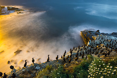 High angle view of cormorants perching on shore during sunset - p1166m1509092 by Cavan Images