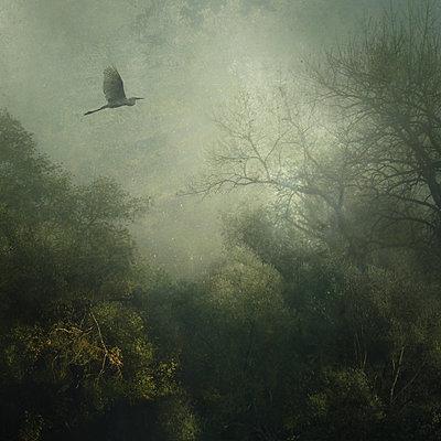 Fog Over The Marshlands - p1633m2208973 von Bernd Webler