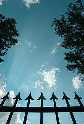 Upwards - p1657m2297178 by Kornelia Rumberg