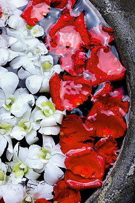 Rose petals in water, Thailand - p312m672838 by Bruno Ehrs