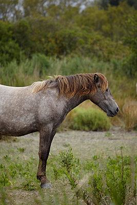 Pferd in der Camargue  - p4150311 von Tanja Luther