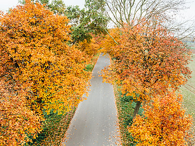 Country road with autumn colors, aerial view - p586m1091016 by Kniel Synnatzschke