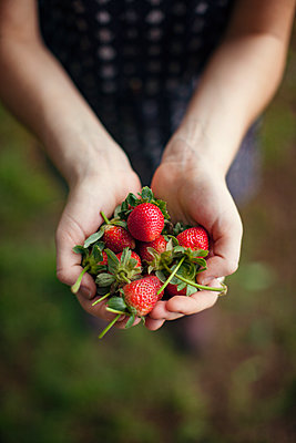 Overhead view of woman holding harvested strawberries in cupped hands - p1166m1154024 by Cavan Images