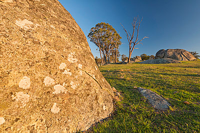 Australia, New South Wales, Arding, dead wood, eucalyptus trees and boulders in the morning sun - p300m937508 by Holger Spiering