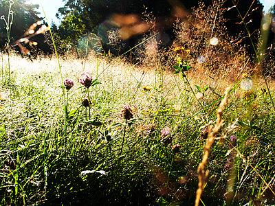 Wiesenblumen - p551m1119067 von Kai Peters