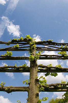 Vine branch - p1781114 by owi