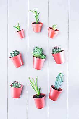 Small cacti and succulents - p1149m2027267 by Yvonne Röder