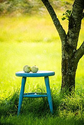 Apples on stool under tree - p1418m2124807 by Jan Håkan Dahlström
