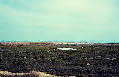 Flamingos vor bedrohlicher Raffinerie-Kulisse - p432m1590384 von mia takahara