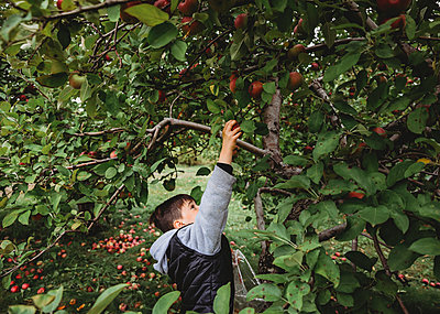 Side view of cute boy reaching for apple on fruit tree at orchard - p1166m2112124 by Cavan Images