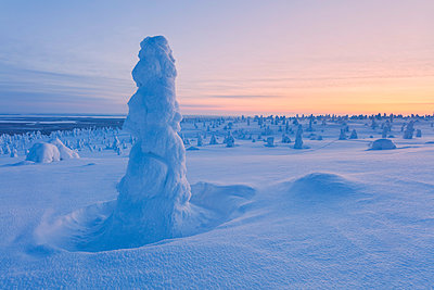 Lone frozen tree in the snowy woods, Riisitunturi National Park, Posio, Lapland, Finland - p651m2033204 by Roberto Moiola
