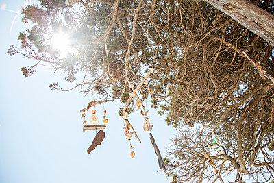 Windspiel - p712m1541267 von Jana Kay