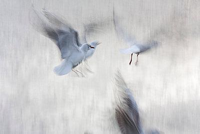 Seagulls - p7390027 by Baertels