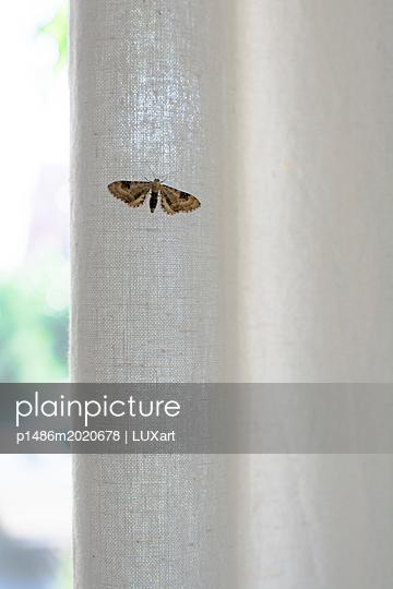 Motte auf Vorhang - p1486m2020678 von LUXart