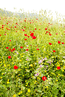 Flower meadow in Turkey - p382m858520 by Anna Matzen