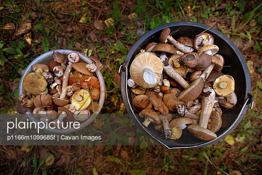 p1166m1099685f von Cavan Images
