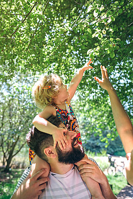 Little girl on her father's shoulders stretching to touch a branch - p300m1536261 by David Pereiras