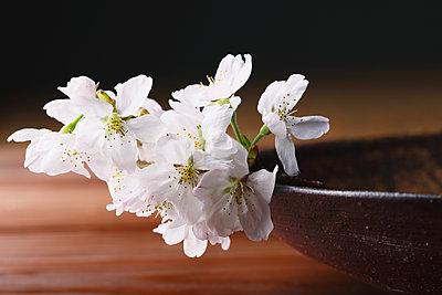 Japanese traditional pottery - p307m1106032f by Hideki Yoshihara