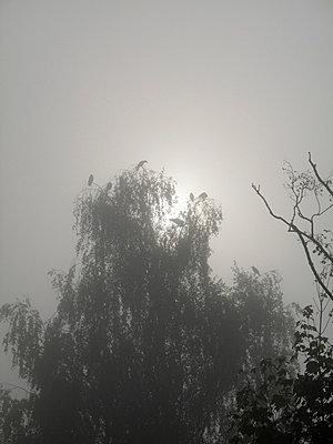 Misty - p6460127 by gio