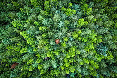 Green pine forest from above, Vancouver Island, Canada - p1166m2129718 by Cavan Images